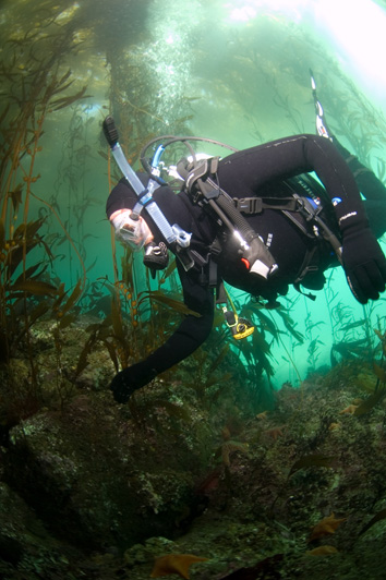 diving a kelp forest
